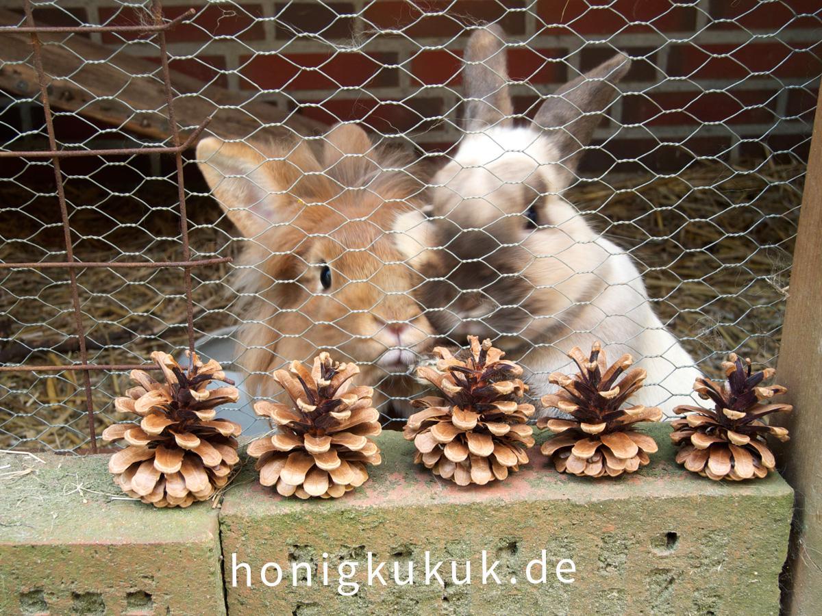 Kaninchenzapfen